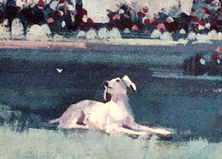 water1962dogbingo