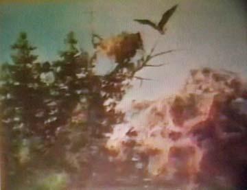 1974_06video.jpg