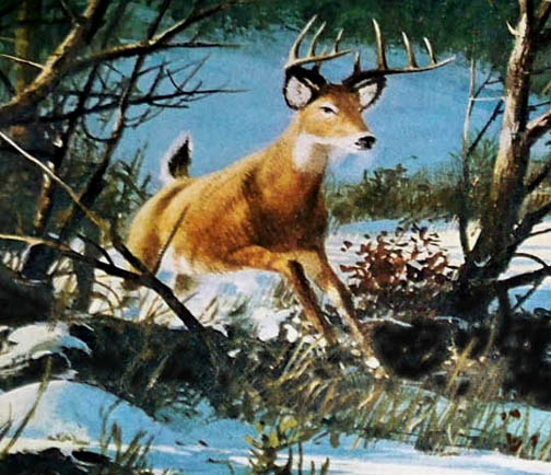 1971dec_deer.jpg