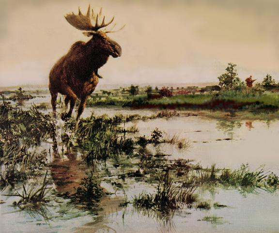 moosewebart